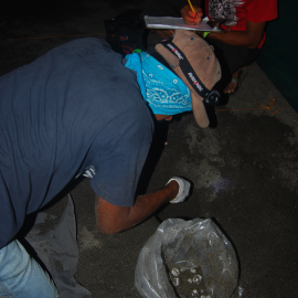 Placing a clutch in the hatchery - Phoito by Heydi Salazar, FFI