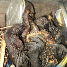 Pangolins are part of the bushmeat trade. Here is an image of cooked pangolin parts for sale in the Democratic Republic of the Congo.