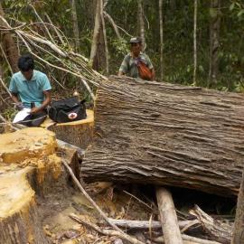 Community ranger is making a report of an illegal logging incident in the forest