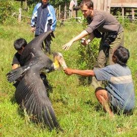 Members of the community and the Poh Kao team resuce a Sarus Crane