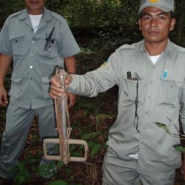 Two rangers hold up the snares they found and removed from the forest
