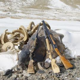 Rifles and the poached remains - antlers of mountain sheep.