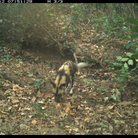 Camera trap images.
