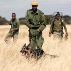 Manyara Ranch K9 unit on patrol. Handler with his dog.