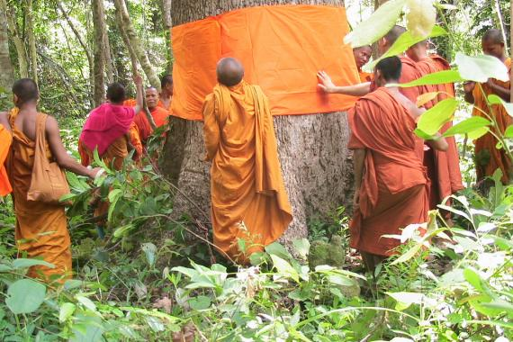 Monks in Cambodia's Monks Community Forests surround a tree and use a strip of orange cloth to wrap around its trunk in order to ordain the tree to protect it from logging