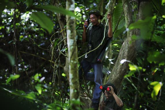 Muktar, age 44, is perched in a tree whilst patrolling the Ulu Masen forest in Aceh, Indonesia.