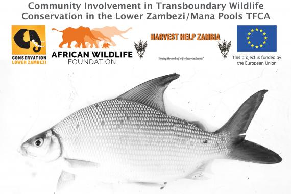 Community involvement in transboundary wildlife conservation in the Lower Zambezi/Mana Pools TFCA