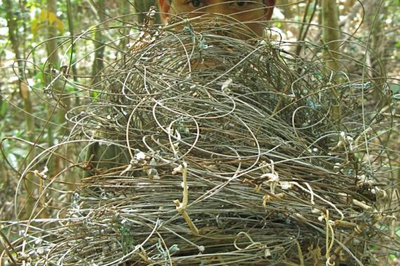 Patrol team with wire snares collected in saola habitat, central Laos (Nakai-Nam Theun National Protected Area).
