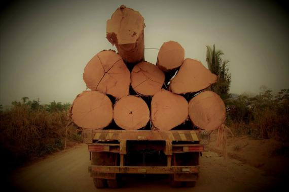 Tree logs taken from the Amazon by secondary roads.
